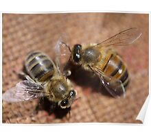 An Aussie Bee in Macro (1) Poster