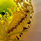 cactus flower heart by globeboater