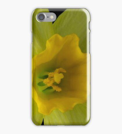 Daffodil Flower iPhone Case/Skin