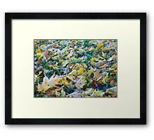 Frost on fallen leaves - closeup Framed Print