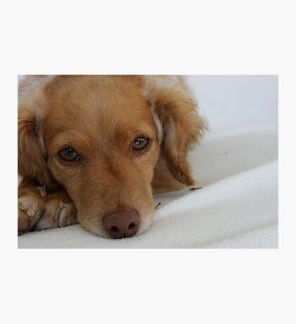 Rescue dog  Photographic Print