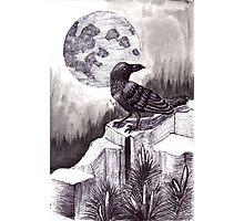 Moonlight Raven Photographic Print