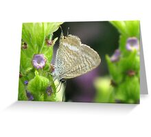 Long-tailed Pea Blue Butterfly Greeting Card