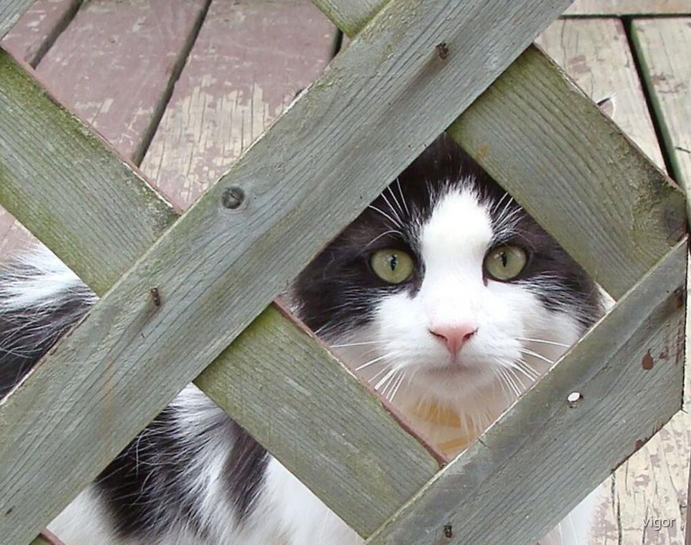 I'm Looking at You! by vigor
