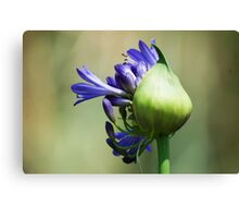 Blue beauty of Lily Canvas Print