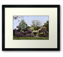 The Wisteria Garden at Longwood Framed Print