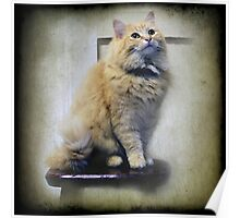 Junper sits on the Kitchen stool Poster