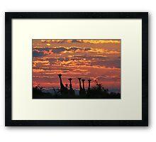 Giraffe - Sunset Sky - African Wildlife and Nature Background Framed Print