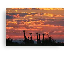 Giraffe - Sunset Sky - African Wildlife and Nature Background Canvas Print