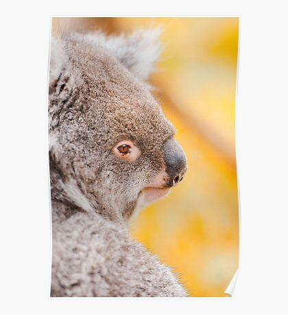 Koala by itself in a tree Poster