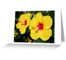 Sunny Yellow Hibiscus Greeting Card