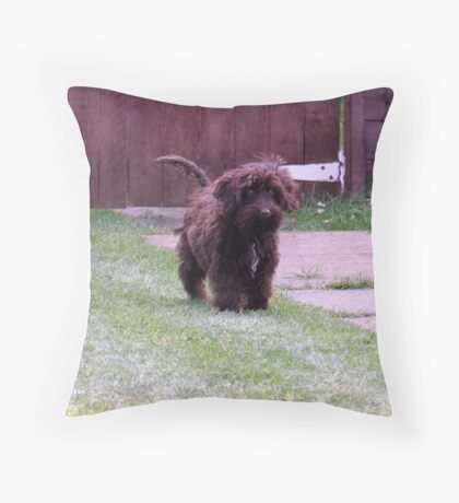 Chocolate Cockapoo Throw Pillow