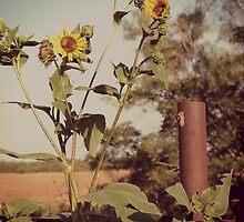 Sunflower Solitude by Krystal Easter