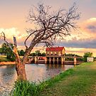 The Tree on the Dam by JohnDSmith