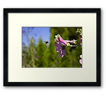 Bee and pink flower Framed Print