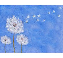 flying dandelion watercolor painting Photographic Print