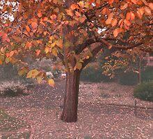 Autumn Tree,Geelong Botanical Garden,Australia. by Darryl Fowler