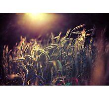 Summer light II Photographic Print