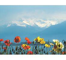 Swiss Flowers Photographic Print