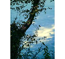 Dreamy Evening Photographic Print