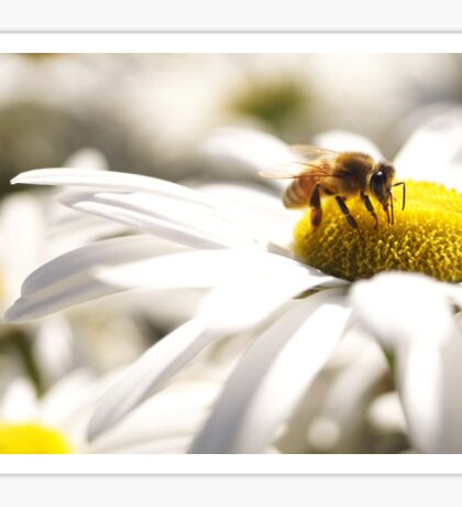 Bumble Bee on a Daisy  Sticker