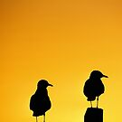 SEAGULL-SUNSET-0132 by Paul Foley