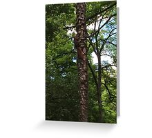 The Hidden Squirrel Greeting Card