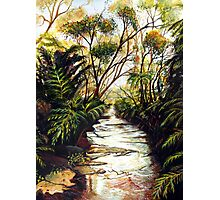 Katoomba Creek, Blue Mountains Australia Photographic Print