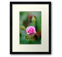 Fairy Floss Pink Framed Print