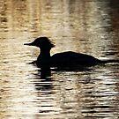 Silhouette on the water by AleksCanard