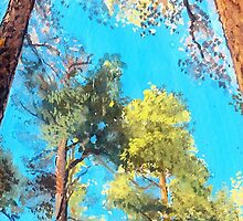 Looking up: Pine Forest Glory by ThePaintedTree