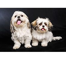 Timmy and Biscuit Photographic Print