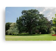 tree in the garden Canvas Print
