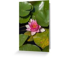 waterlily in the lake Greeting Card