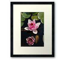 waterlily in the lake Framed Print