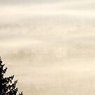 8.9.2014: Spruce Tree by Petri Volanen