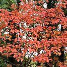 Fall in my backyard by bubblehex08