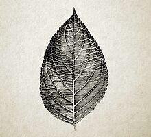 Leaf Print I by Daniel Watts