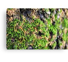 Mossy Hair Day Canvas Print