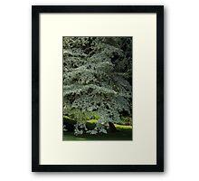 tree in spring Framed Print