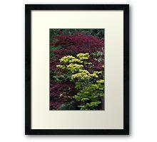 tree in the garden Framed Print