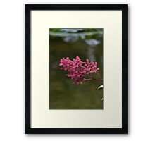 flower on water Framed Print