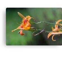 flower in the garden Metal Print
