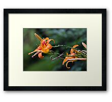 flower in the garden Framed Print