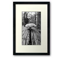 'Shroom Framed Print