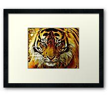 Sumatran Tiger III Framed Print