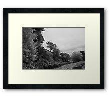 Black and White Trees Framed Print