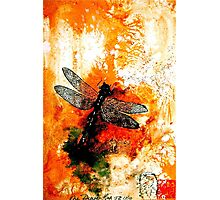 The Nature of Things...The Dragonfly Photographic Print