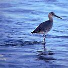 Beach Stroll by Sandy Woolard