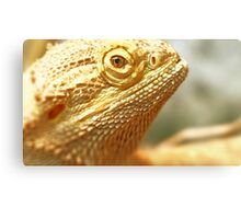Bearded Dragon (Lizard) - Spike Canvas Print